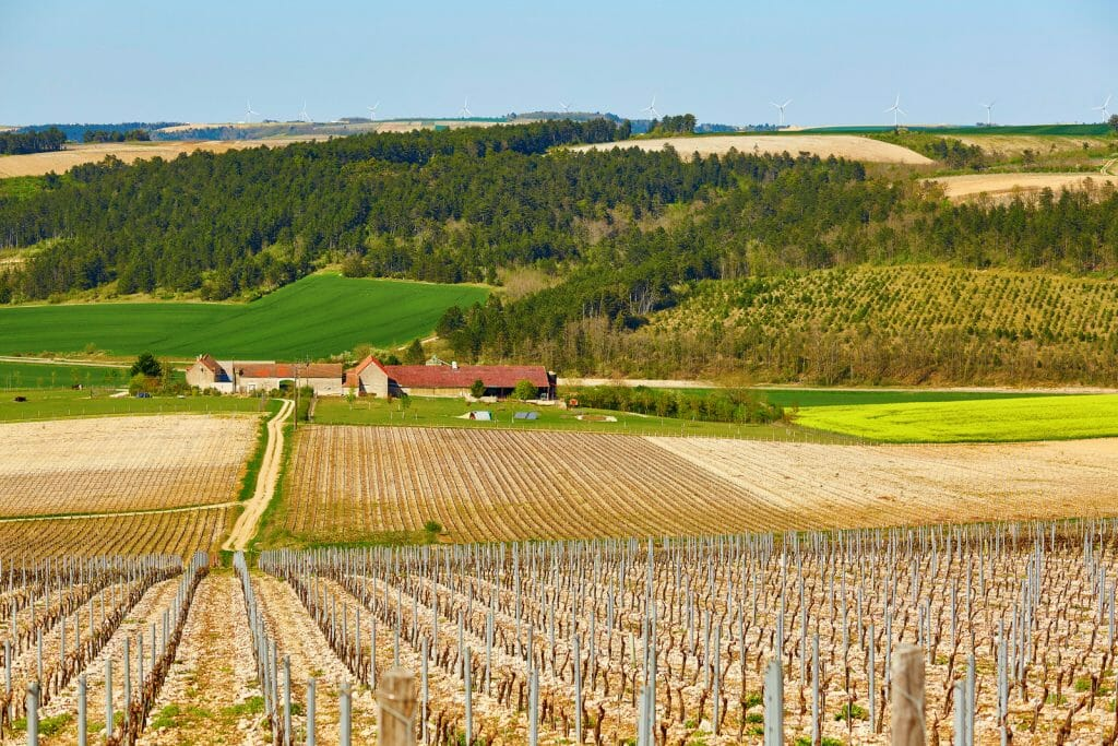 Beautiful vineyards in Burgundy in the beginning of the spring