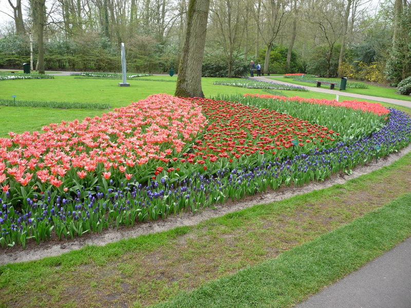 Colorful Paths in the Keukenhof Garden