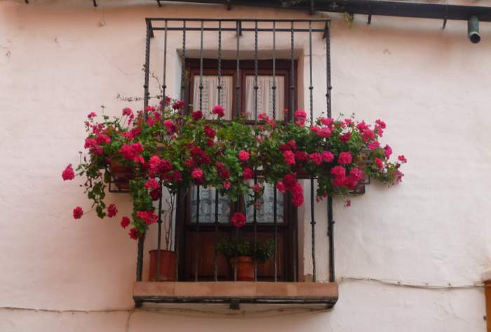 Cascading blooms from a balcony in Seville