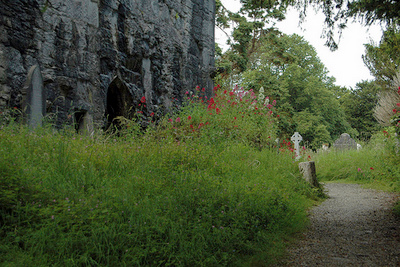 Muckross Abbey by Amerune