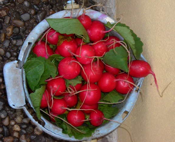 radishes and other produce is grown locally
