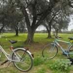 Italy From Bottom to Top: Biking in Puglia