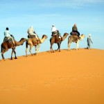 Camel Trekking Into the Sahara