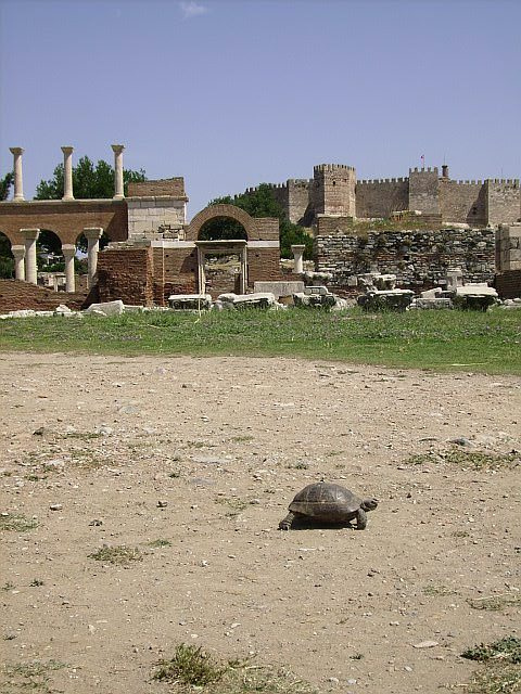 Selcuk Basilica with turtle