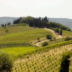 Italy From Bottom to Top: Wine Tasting in Chianti