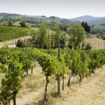 Insider's Guide to Wine Tasting In Chianti