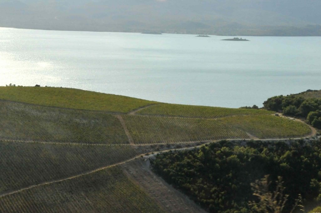The vinyards of Croatia overlooking the Adriatic