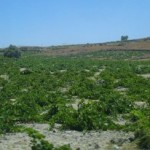Wine and Kitron Tasting on the Greek Isles