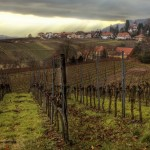 Wine Tasting in the Ahr Valley of Germany