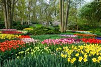 Tulips in Holland - Keukenhof Garden - River Cruise from Amsterdam Netherlands
