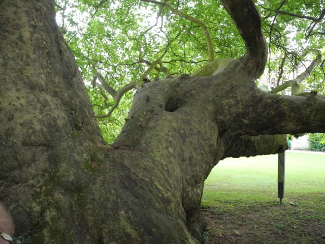 Jabberwocky tree