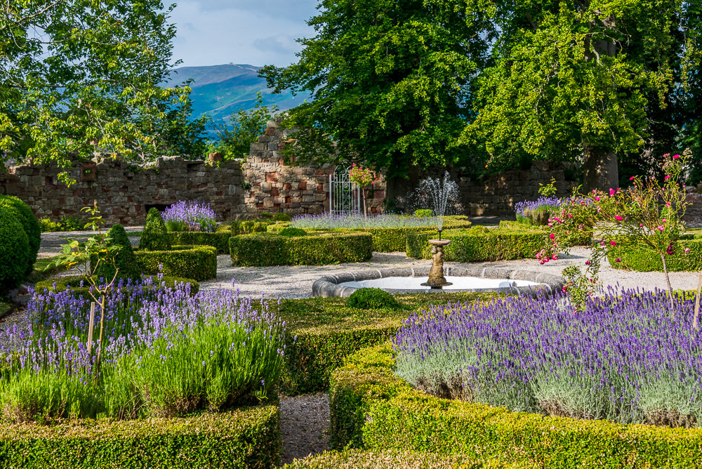 White gravel pathways meander through the Ruthin castle grounds, separating circular arrangements of brightly colored flowers and purple lavender blooms