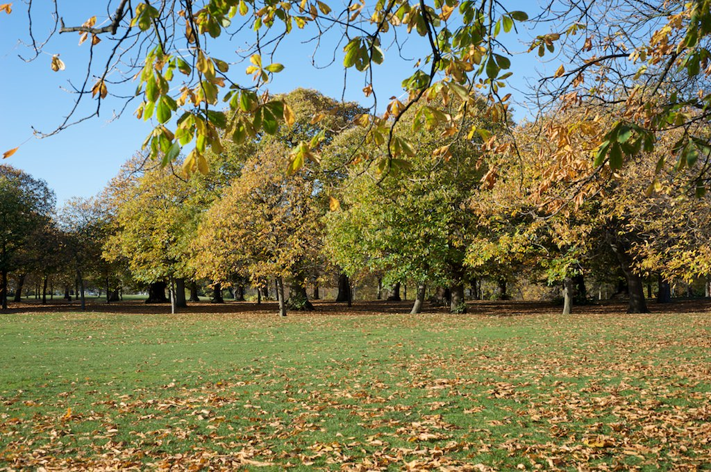 Greenwich Park is the oldest royal park in the country