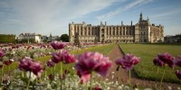 The Chateau de St Garmain en Laye in the background and large purple flowers in the foreground of Saint Germain en Laye