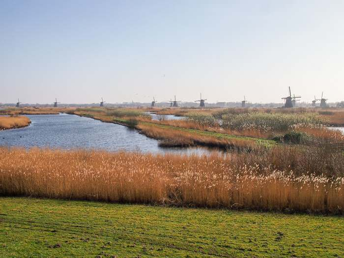 A quintessential Dutch landscape with the Kinderdijk windmills in the background