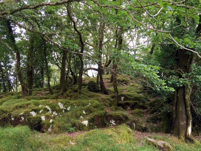 Mossy rocks and woodlands are at the lower end of the Gap of Dunloe walk.