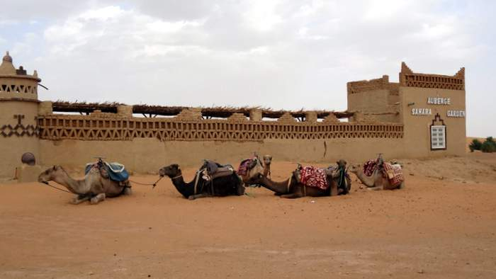 Our rides await outside our hotel in the sahara