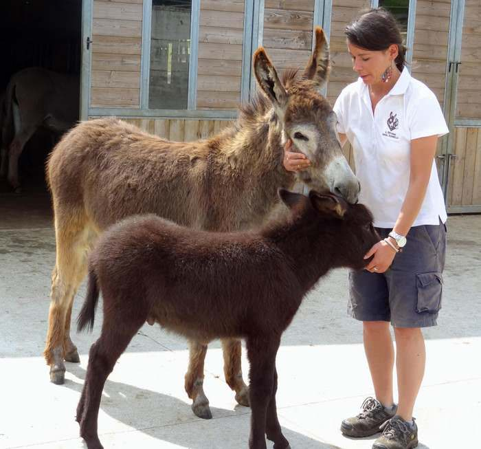 A loving bond between residents and volunteers at Italy's Donkey Refuge