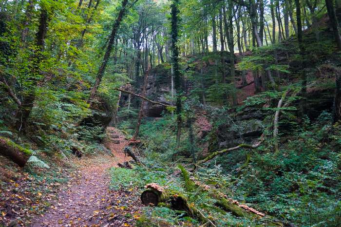 The Mullerthal trail often runs through dense forests