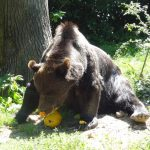 Why you'll Cry and Laugh at the LiBearty Bear Sanctuary