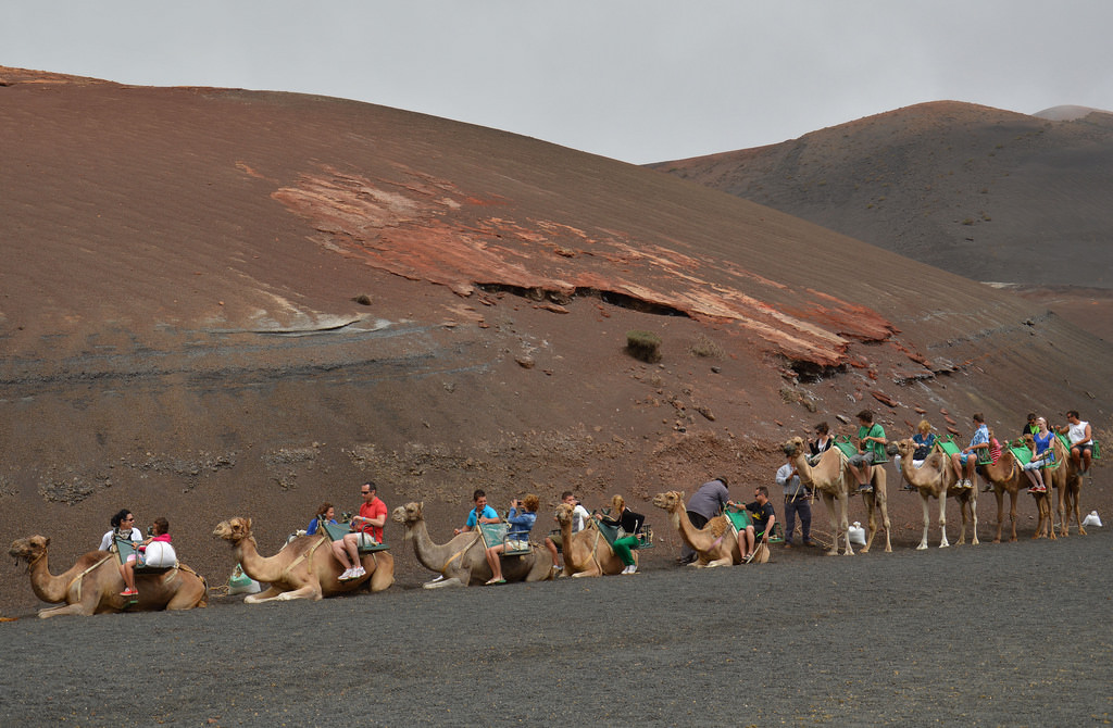 Camel riding in Lanzarote