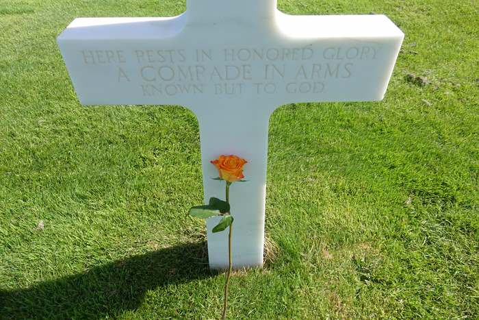 A peach colored rose in Normandy's American cemetery