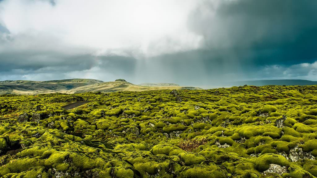 landscape of round bolders covered with light green moss in Iceland
