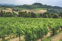 1 Week Tuscany Itinerary: Vineyards in Sovestro in Poggio