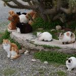 Rescuing the Cats of Athens