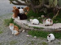 Rescuing feral cats of Athens - Nine Live Organization Greece