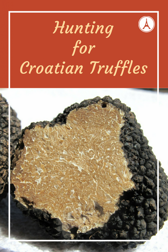 Hunting for Croatian Truffles - Harvesting Black and White Truffles on Croatia's Istrian Peninsula