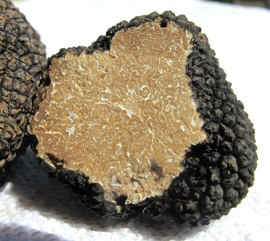 Croatian Truffles - Truffle Hunting in Istria Croatia