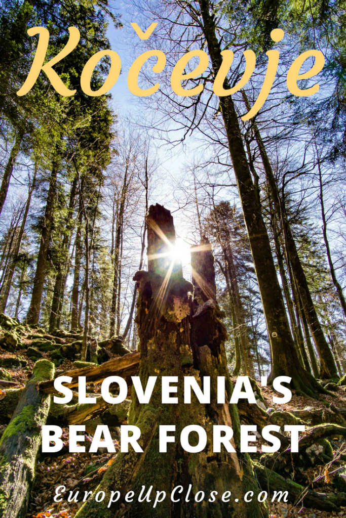 Kočevje - Slovenia's Bear Forest - Virgin Forest in Slovenia - Hiking in Slovenia - Eco Tourism Slovenia