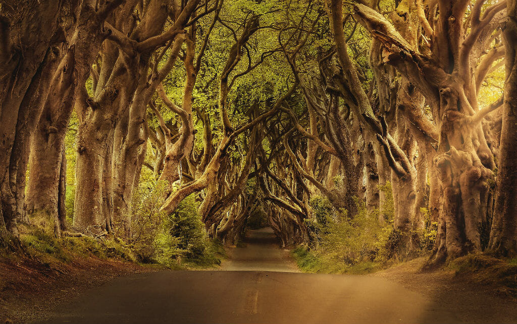 Game of Thrones Tours Belfast- Nothern Ireland Game Of Thrones Excursion