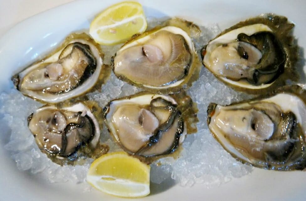 Bota Šare Oysters-Things to do in Dubrovnik