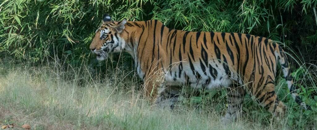 Madhya Pradesh Tourist Places - Bandhavgarh National Park Tiger Reserve