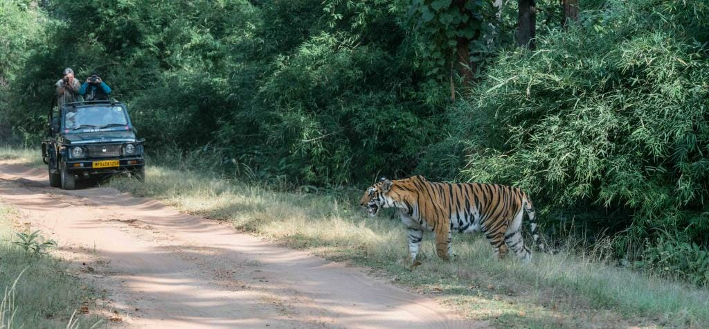 Pugdundee Safaris - Bandhavgarh Safari - Tiger Safari Bandhavgarh National Park - Tigress Spotty Bandhavgarh - Tiger Conservation in India