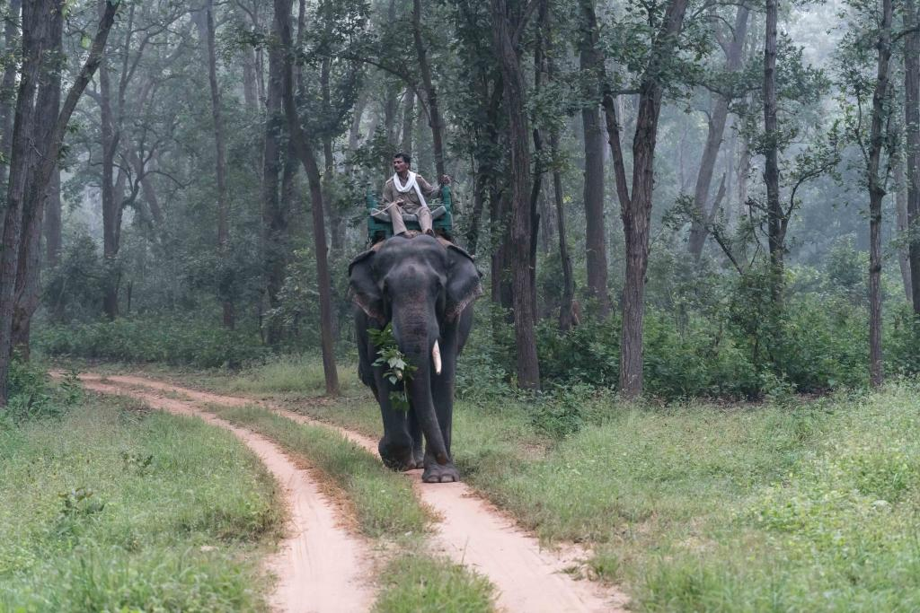 Kanha National Park - Best Madhya Pradesh Tourist Places India