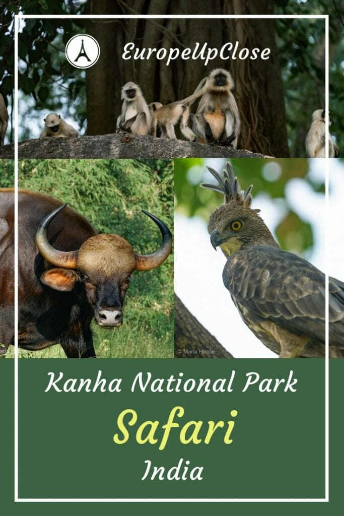 Safari National Park Kanha India Madhya Pradesh - Pugdundee Safari #Safari #wildlife #wildlifephotography #india #incredibleindia #Indian #animals #travel #traveling #traveller #traveler #travelling #heartofindia #madhyapradesh #sustainabletravel #greentravel #sustainability