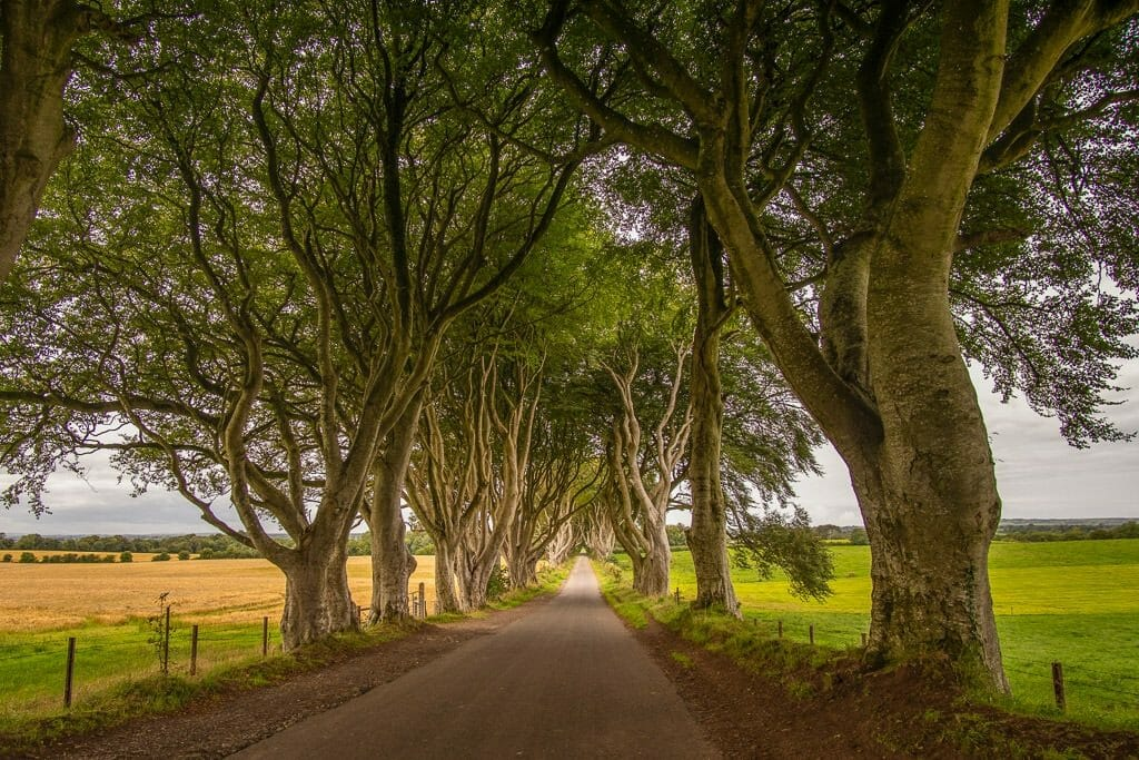 Road in Northern Ireland with twisted trees called the Dark Hedges - The King's Road