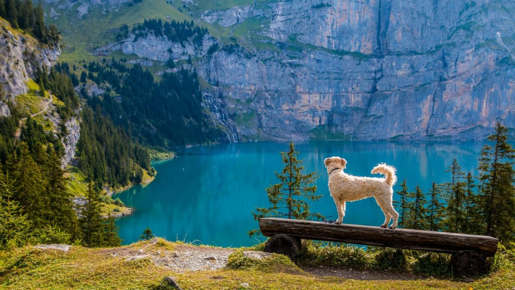 Dog looking at a lake