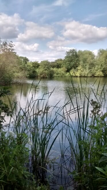 Gorgeous pond, peaking through the tall grass to look upon the Nature Reserve