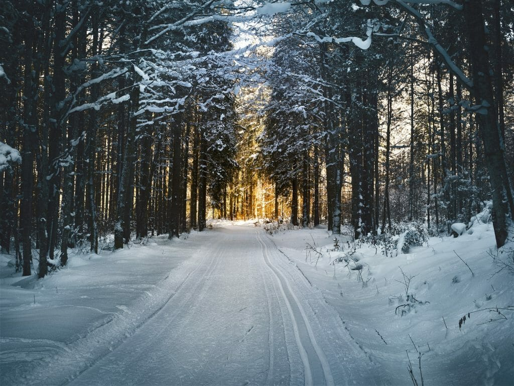 Cross country ski route generously dusted with snow, lined with snowy trees with a sunset in the distance