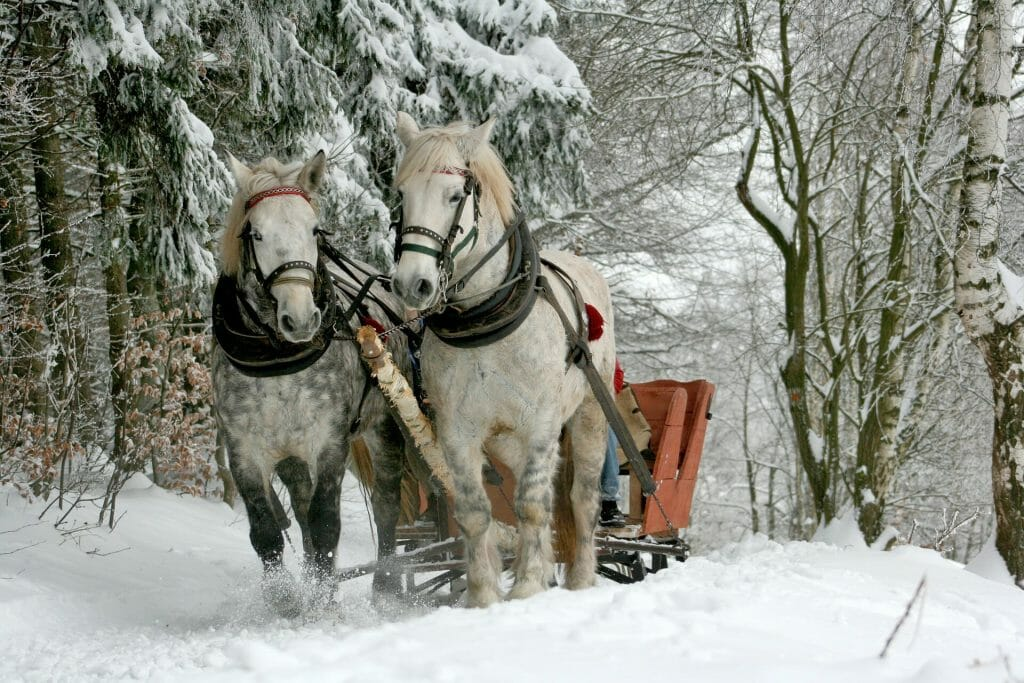 Two horses pulling a sleigh through the wintry forrest