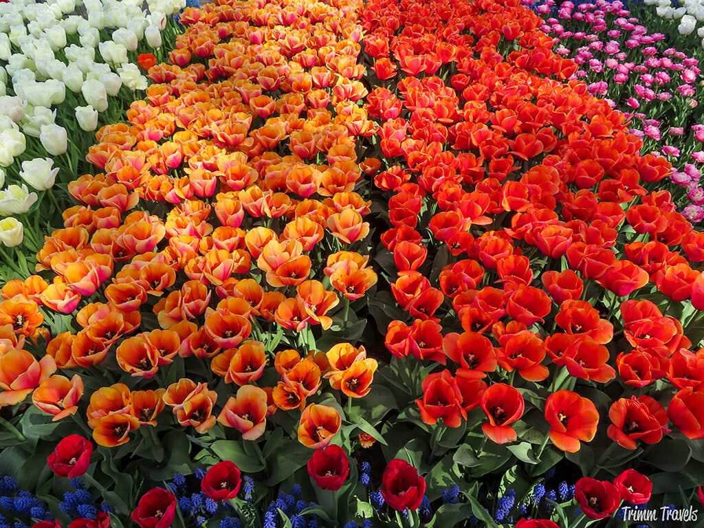 Red, orange, purple, and white flowers neatly lined up