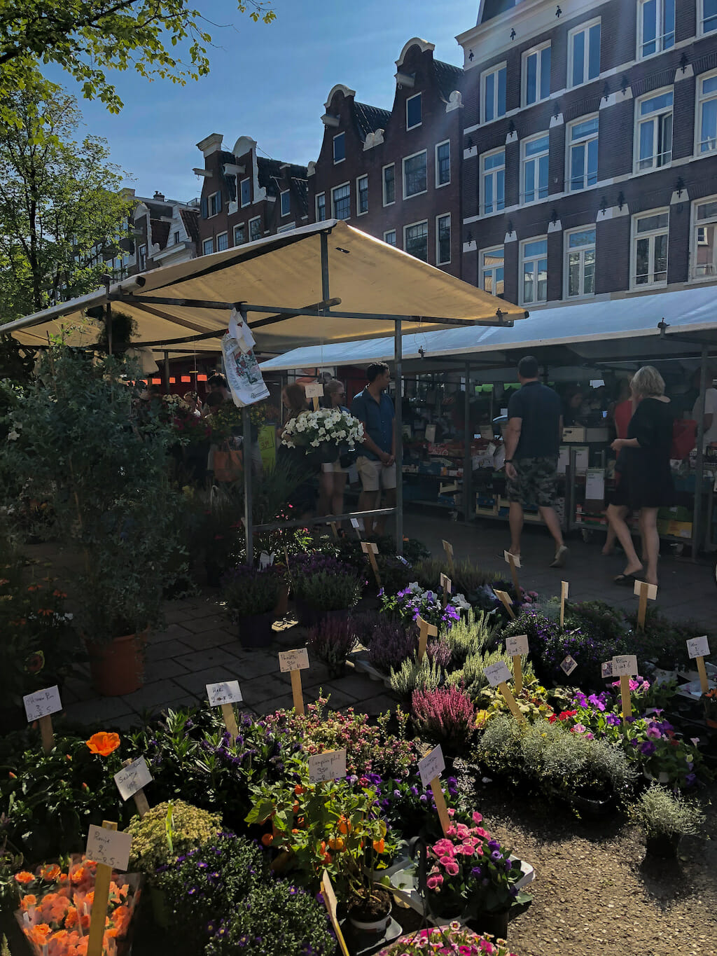 A lush of a plethora of potted plants clumped together in a street market booth in Amsterdam