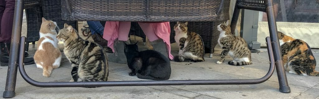 Cats sitting under tables at a Cafe in Limassol
