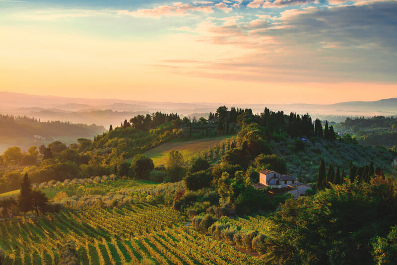Green Tuscany hillside with vineyards and cyprus trees at dawn with pink sunrise sky