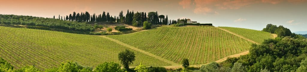 Beautiful green Vineyards in Chianti region near Mercatale Val di Pesa. Tuscany in Italy.