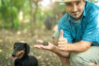 Successful truffle hunting Italy. Man holding truffle in his hands and thumbs up with Black Dachshund in the back.